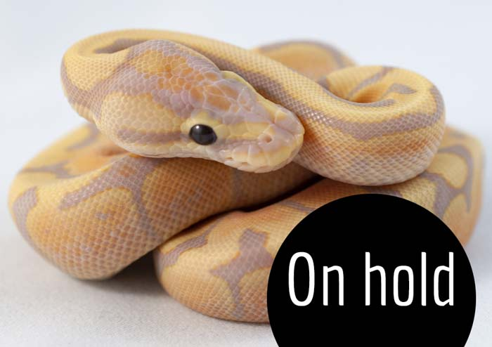 Dec 21 2019 - Coral Glow Fire Woma - Lydia